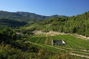 Weinregion D.O. Montsant – Wein aus Katalonien, der von Herzen kommt